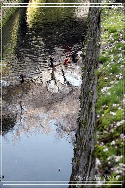 京都單車2010_0404_153428.jpg