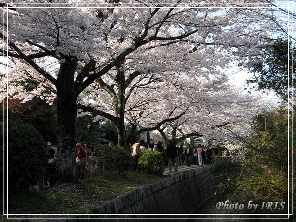 京都單車2010_0404_154625.jpg