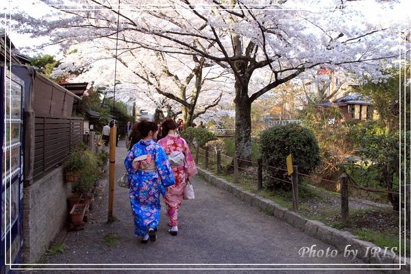 京都單車2010_0404_155657.jpg