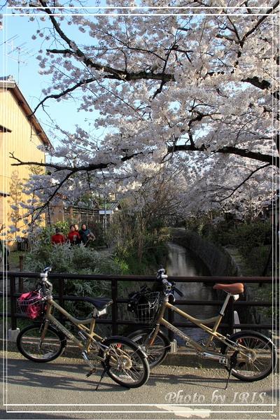京都單車2010_0404_154747.jpg