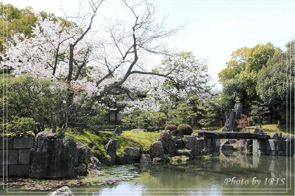 京都0404028.jpg