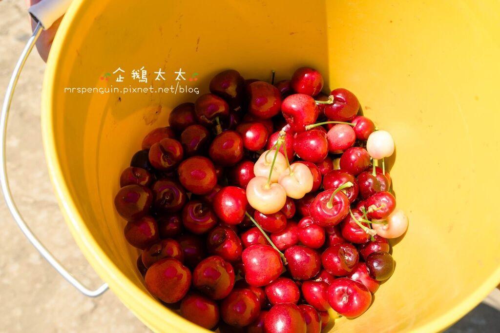 0採草莓 094.jpg