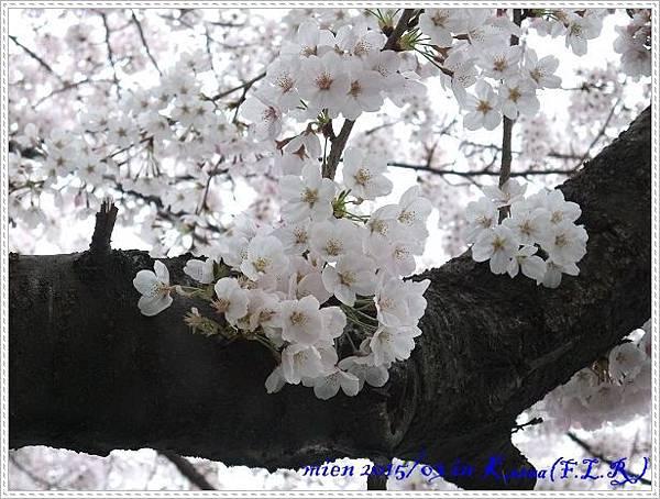 DSCF0415.jpg