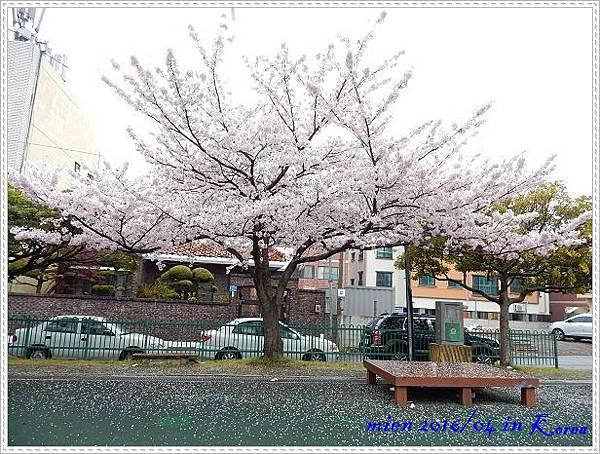 DSCN0361.jpg