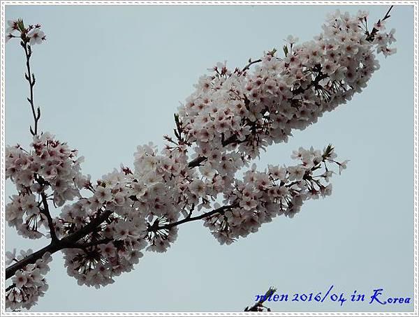 DSCN1347.jpg