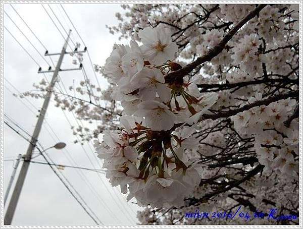 DSCN1463.jpg
