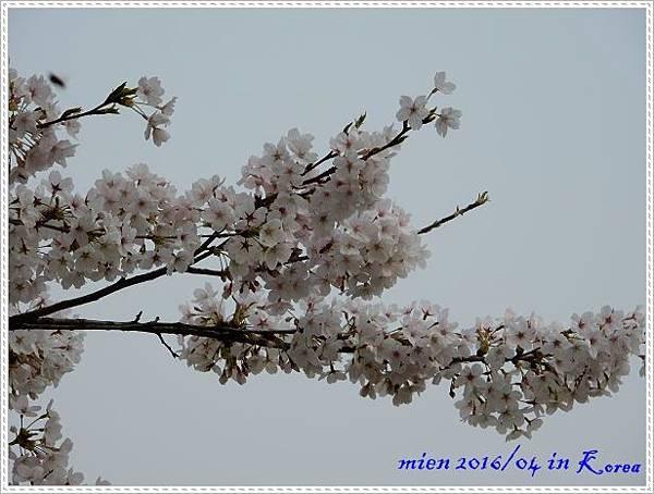 DSCN2989.jpg