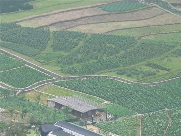 俯看竹子湖