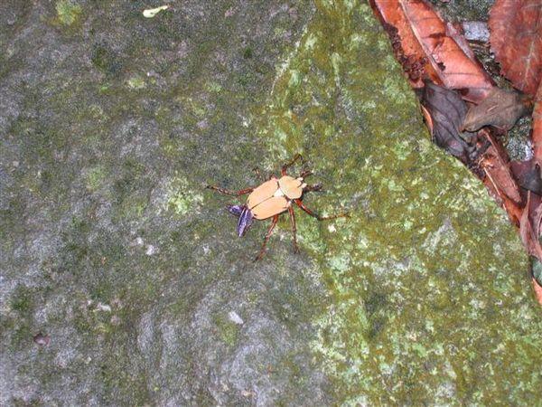 奇怪的小扁蟲