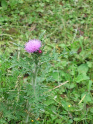 一朵小圓花