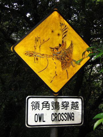 顎角鴞穿越道