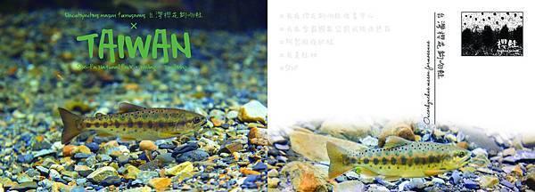 5 亞成鮭 rev (印).jpg