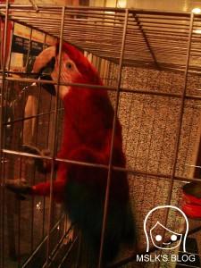 做著奇怪動作的鸚鵡