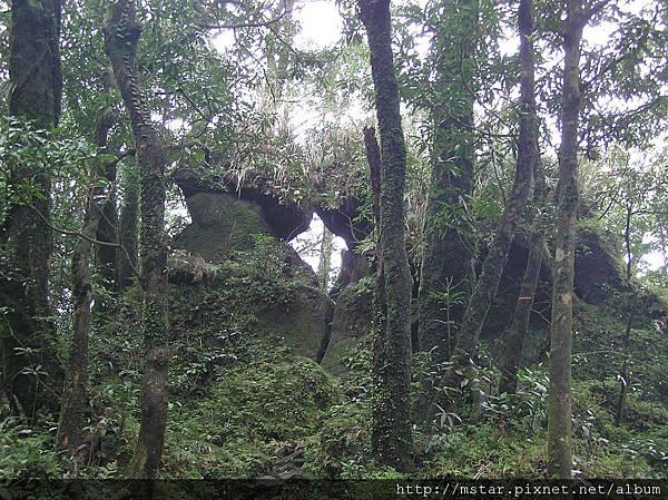 恐龍接吻石