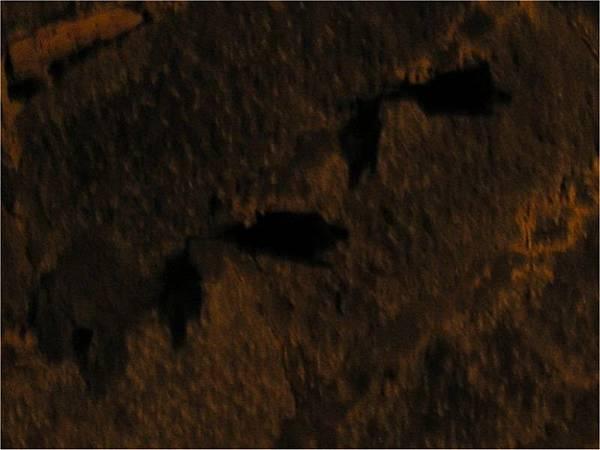 獅球嶺隧道內的蝙蝠