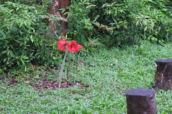 最高點(182M)「森林教室」旁的一朵花