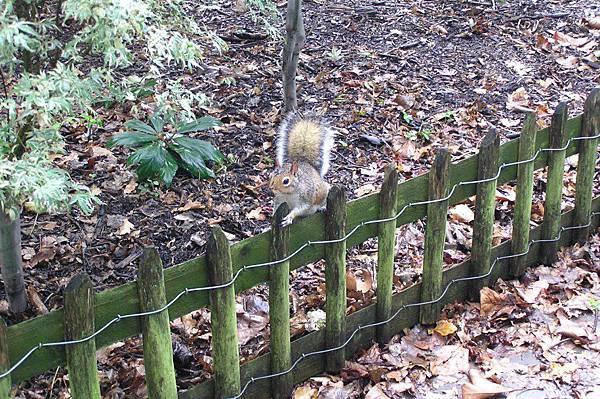 一點都不怕人的松鼠