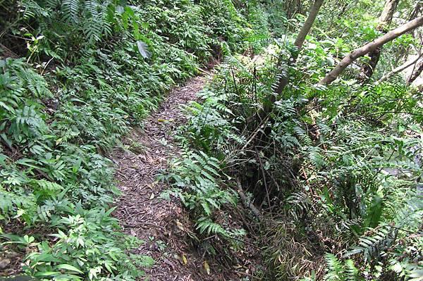 往四面頭山的小路
