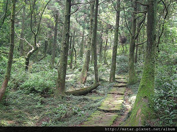 往頂山途中林內