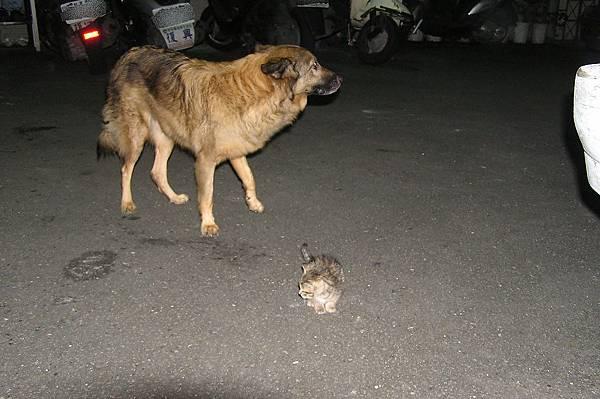 不知該拿小貓怎麼辦