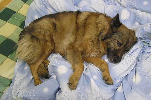 老愛躺在軟軟棉被上
