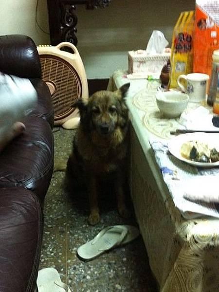 請給我食物