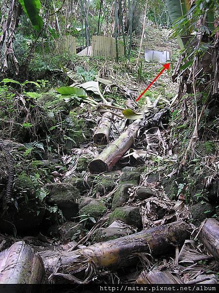 濕滑石階和被分解的枝幹