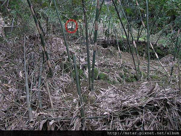 竹林駁坎和遠處的動物園鐵絲網