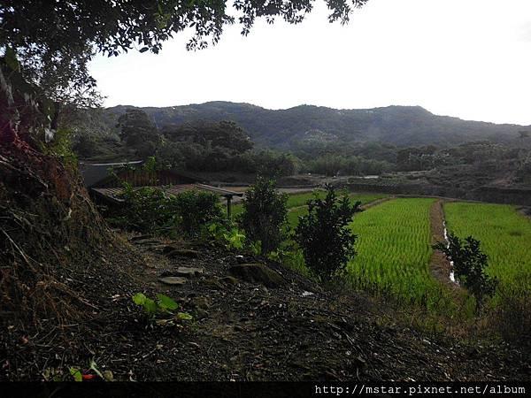 山中的水稻田