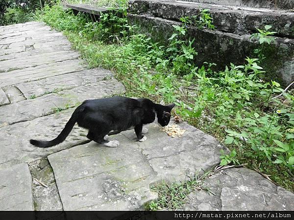 瘦小的貓咪