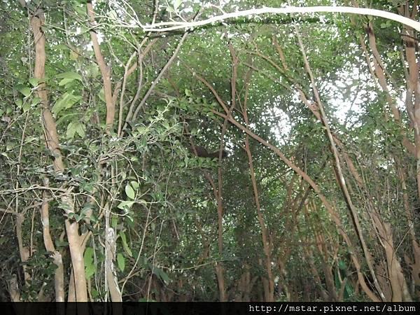 果樹叢中的松鼠