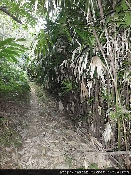 步道一側的茂密植物