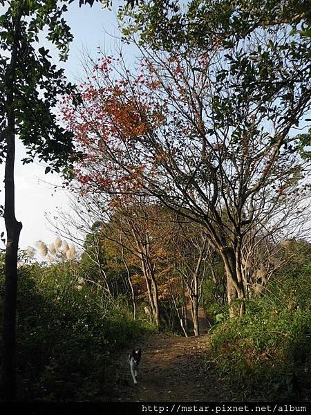 多棵樹的葉子變紅變黃