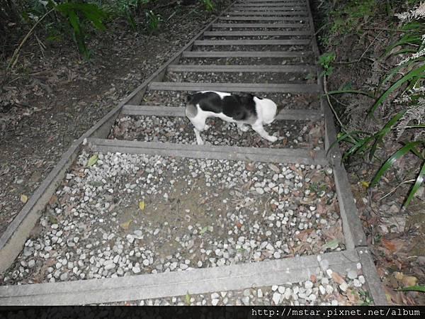 陡下碎石階梯