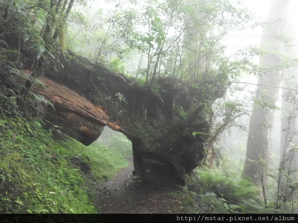 再過樹幹隧道