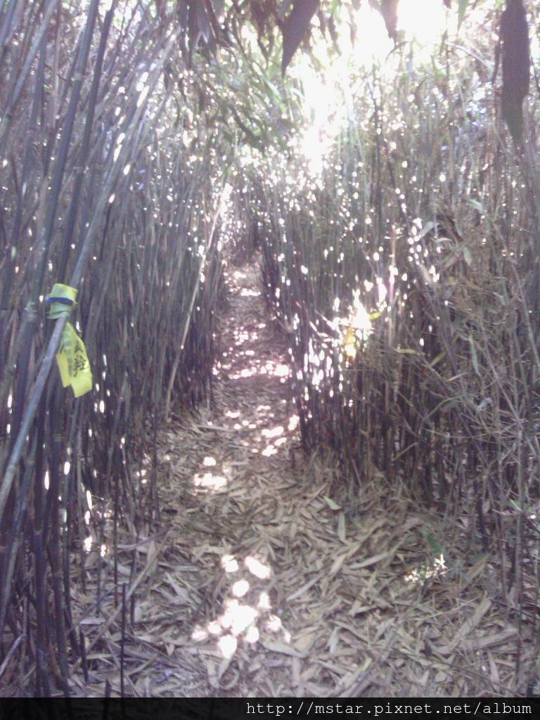箭竹林中陡下