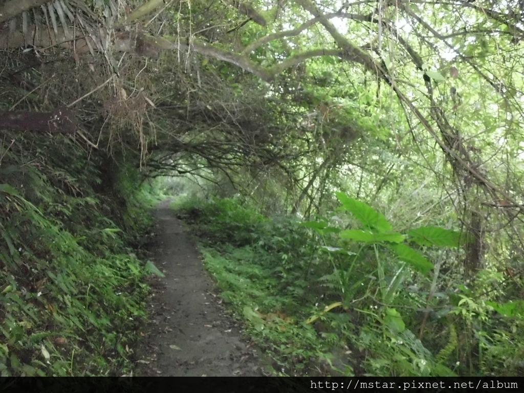 水泥路徑小隧道