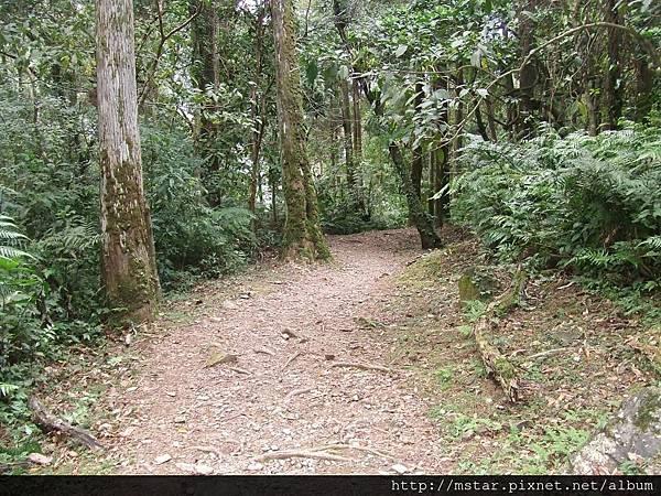 森林遊樂區步道