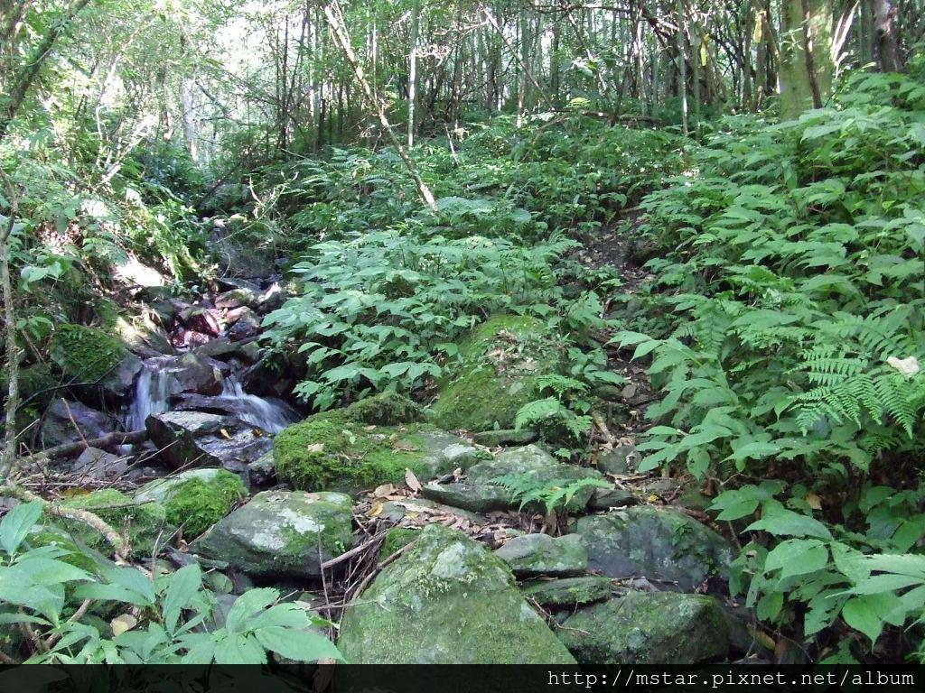 溪溝邊路徑