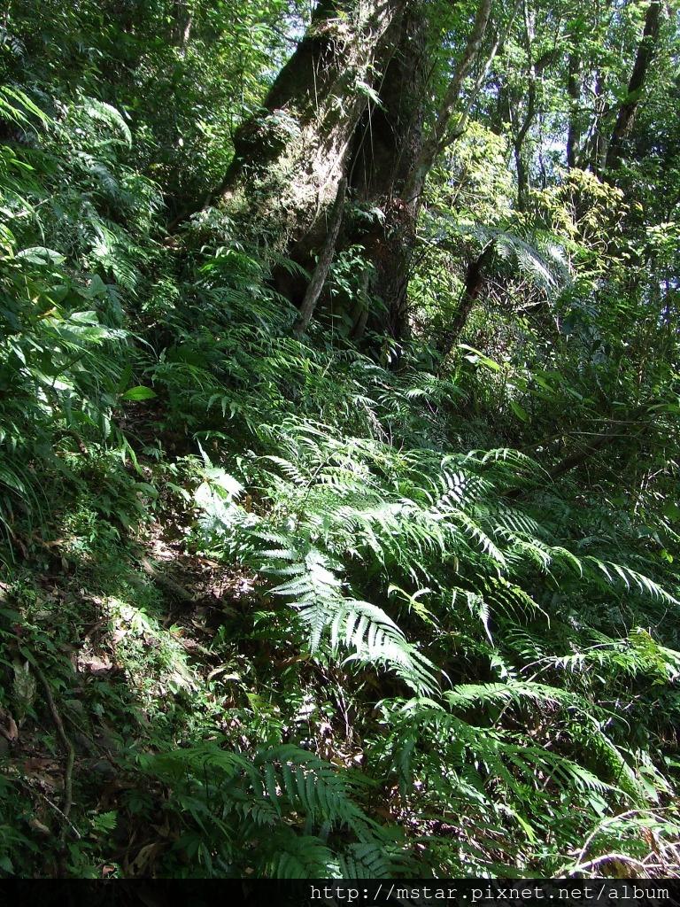 陡坡邊超窄路徑