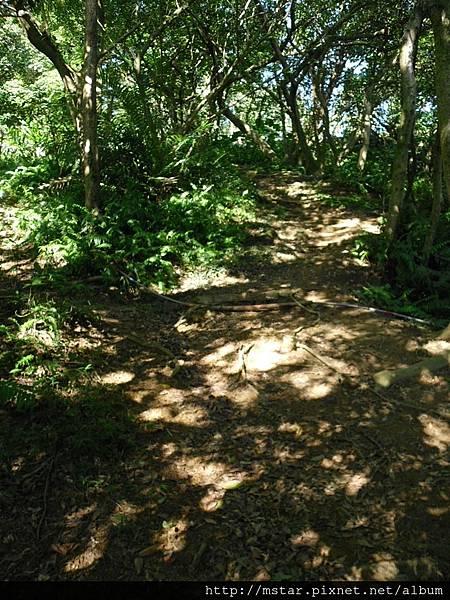 樹根緩陡坡