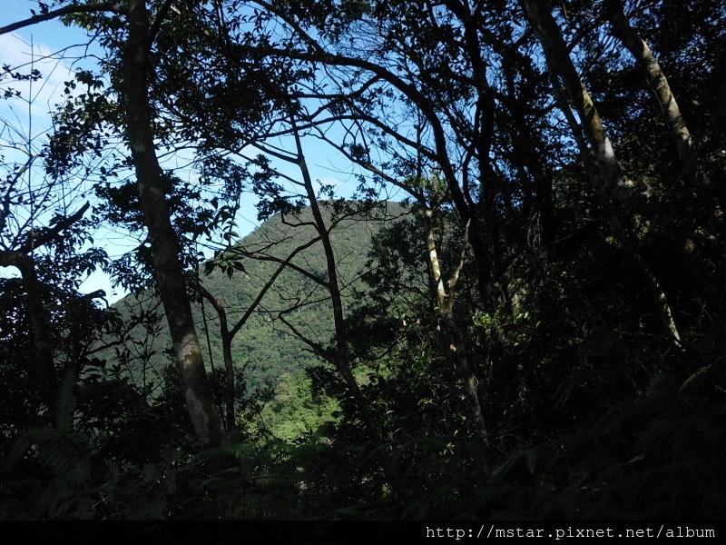 林隙間的大桶山