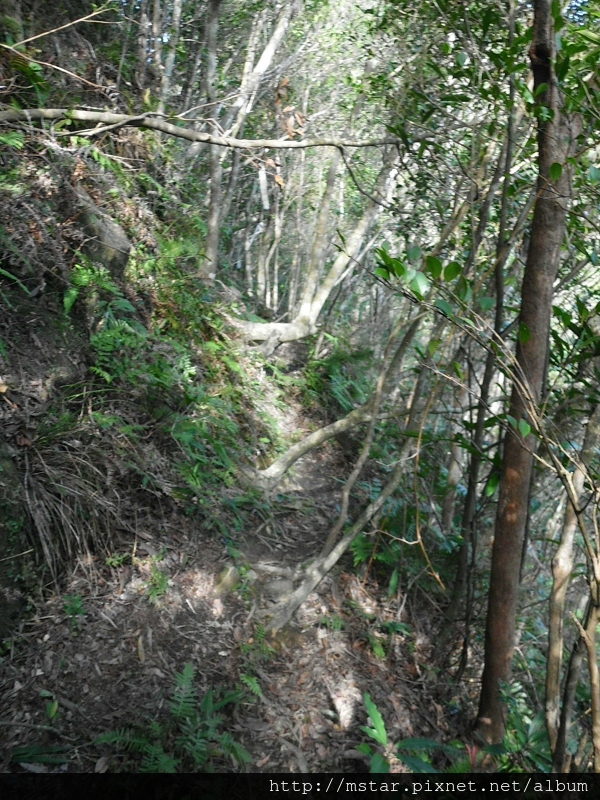 陡坡邊路徑