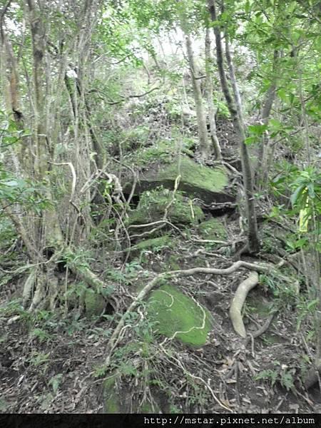 稜線樹根岩石坡