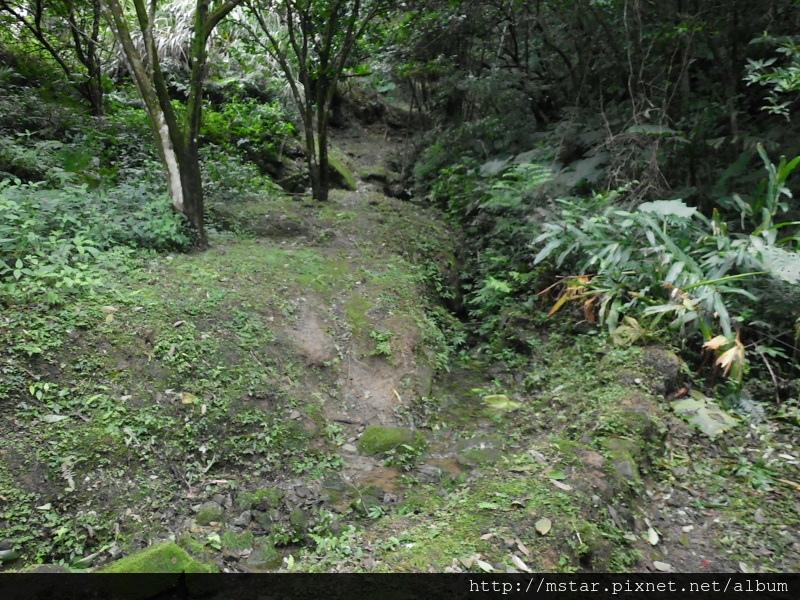 溪溝旁路徑