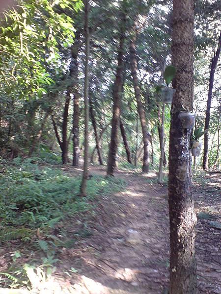 走自然步道