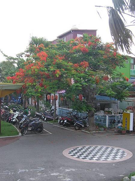 枋寮車站前的樹