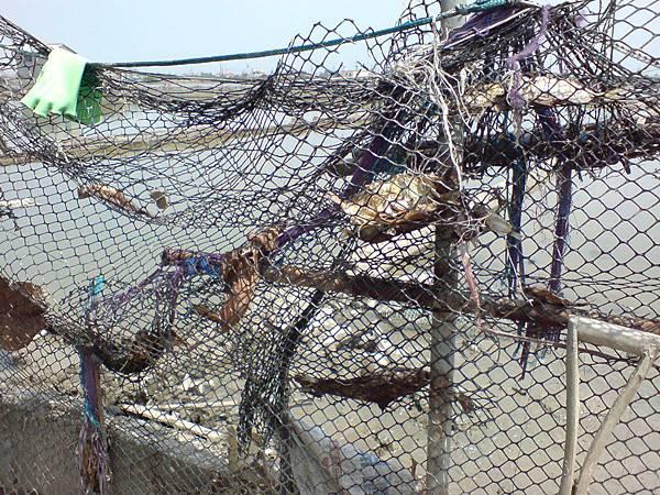 掛網被曬乾的魚