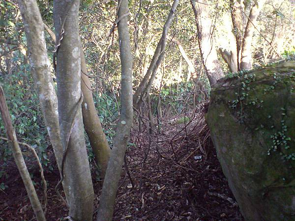 岔路,前方左側有路陡下往中埔山