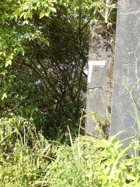 往貓空圓山的小路
